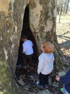 bowdoin tree