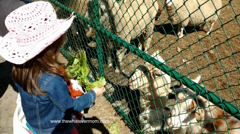 Feeding animals at Michael's Farm